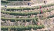 安徽省部分产区春茶开园采摘  比往年提前10天左右