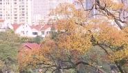 60年来新高!安徽省2月份平均气温9.7°C