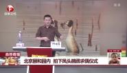 自然奇观:北京颐和园内  拍下凤头??求偶仪式