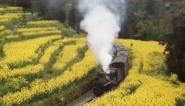 四川乐山:花海小火车  越过山丘探春色