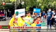 上海动物园猩猩  被游客喂出高血糖