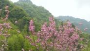 齐云山:四月景色新  八方游客网上快三平台有没有和官方网站来