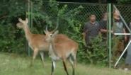 合肥:一群新动物 落户动物园