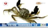 """丰收小课堂:挑选新鲜螃蟹参照""""五看"""""""