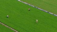 【短视频】今天,向农民致敬,为丰收礼赞