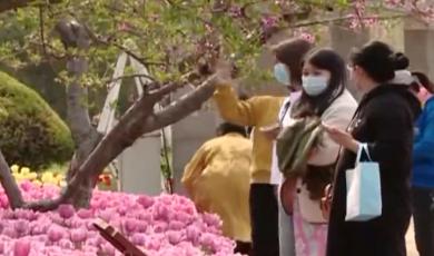 春季踏青游玩  谨防花粉过敏