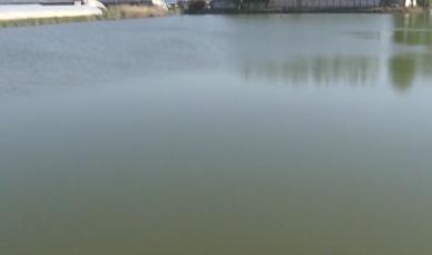 安徽宿州:深夜轿车冲进水塘  交警跳水救人