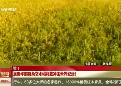 袁隆平超级杂交水稻移栽冲击世界纪录!