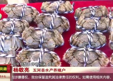 五河:螃蟹开捕庆丰收
