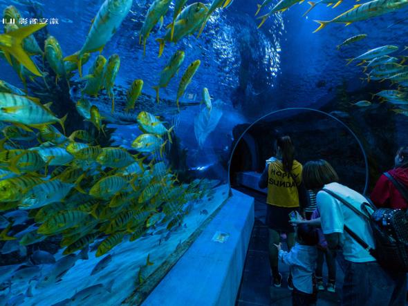 芜湖:夏日海洋世界